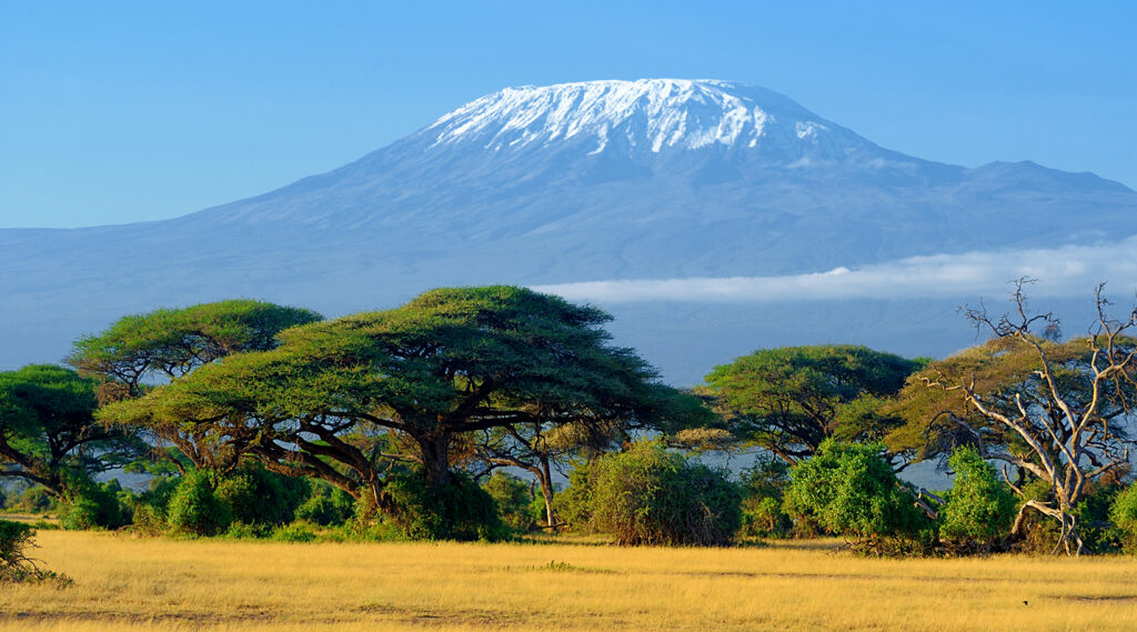 Wooded savannah supplanted by Mount Kilimanjaro in the background