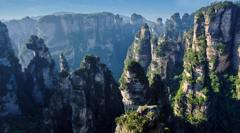 Karst pine forest overlooking the Zhangjiajie Grand Canyon